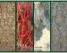 10 arbori și arbuști decorativi prin scoarță