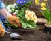Transplantarea arbuștilor la ghiveci garden center cluj